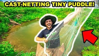 Cast-Netting TINY PUDDLE that's LOADED with FISH to FEED My Pet BASS!!!