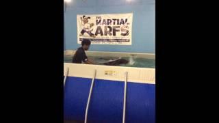 Doberman Pinscher - Swim Class