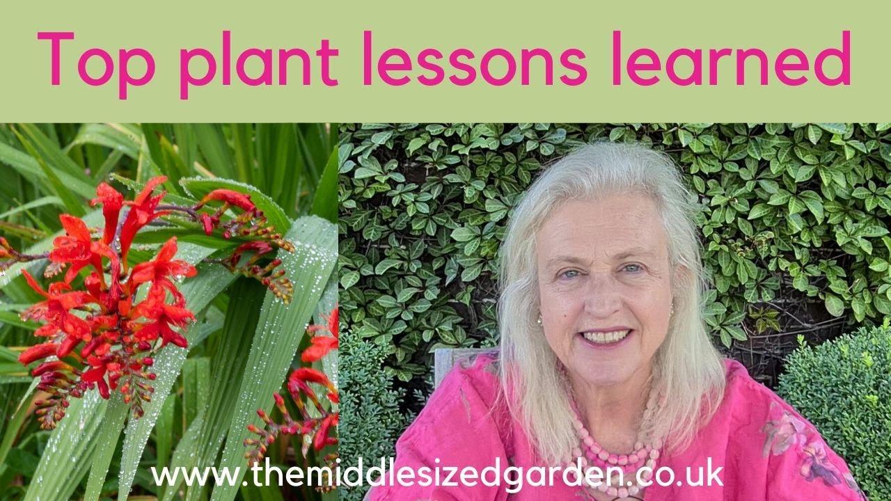 High summer garden tour + gardening tips