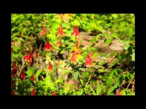 Wildflowers through the seasons