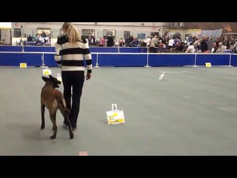 Diaz Rally Obedience Excellent