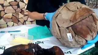 How To Care For Teak Root Furniture With Sarah At Bents Garden & Home