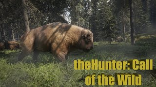 Стрим The Hunter : Call of the wild | Тишина ,природа и Стрим .....