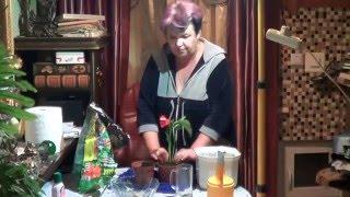 видео Пересадка антуриума в домашних условиях после покупки или если он не цветет