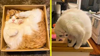 Hilarious Cat Photos Whats Wrong With Your Cat Reddit
