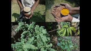 Medicinal Rice P5Z Formulations for Brugmansia Overdose: Pankaj Oudhia