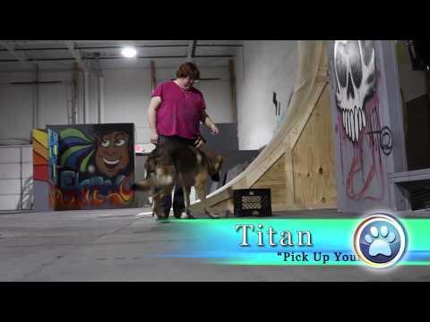 Michigan Dog Training Circus Trick Dogs