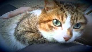 先週亡くなった 猫の ののちゃんにささげます。 あなたの幸せそうな姿は、世界中の人々の心に届きました。 Happy in your appearance, reached the hearts...
