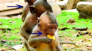 Who Behind Baby Brutus JR?, They Are All Eating Jack Fruit,