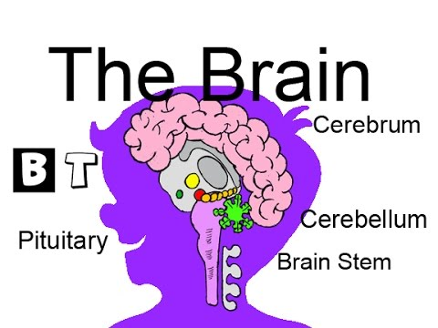 Learn about the brain school science for kids youtube learn about the brain school science for kids ccuart Choice Image