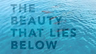 The Beauty That Lies Below