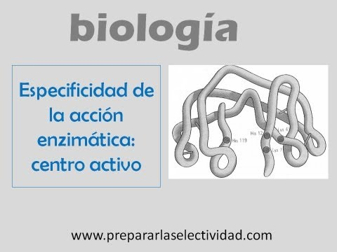 Especificidad de la acción enzimática. Centro activo