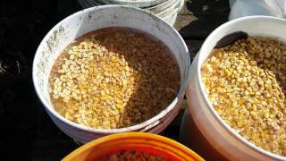 Cheap Pig Feed Hack