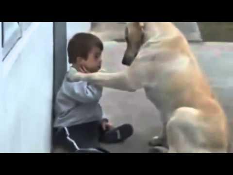 Perro Cuida al Niño - Impactante Video De Amor