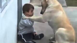 Repeat youtube video Perro Cuida al Niño - Impactante Video De Amor