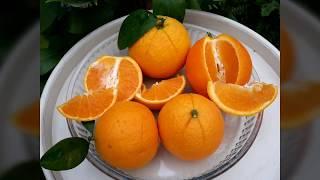 Апельсин Вашингтон Навел, Апельсин Гамлин