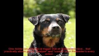 Dogs Rottweiler Pictures Collection