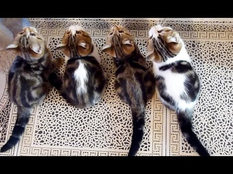Cute Kittens and Funny Cats Compilation for Holydays