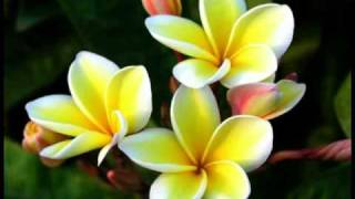 "COOK ISLAND MUSIC ( 5 SONG""S IN ONE MIX) 2015 hot hot"