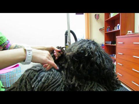 puli grooming