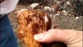 Virginia gold mine, mother lode of gold belt