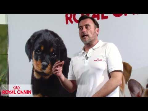 Cómo evitar el miedo del perro a los petardos - Educación canina Royal Canin