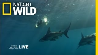 Sharks and Surfers | Shark Attack