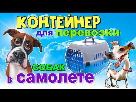 Как выбрать контейнер для провоза собаки в самолёте?