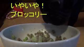 ブロッコリ-をフードに混ぜる!! 2016年11月26日に産まれた フレンチ...