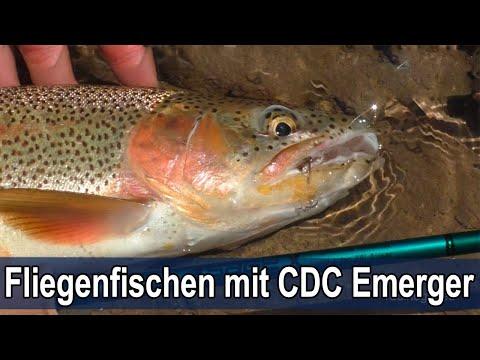 Fliegenfischen Auf Sicht Mit Einem CDC Emerger / Sight Fishing - CDC Emerger / LIVE BISS