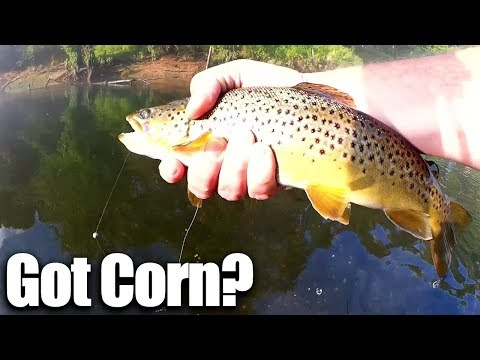 Does CORN Work Better Than Powerbait? Beginner Trout Fishing