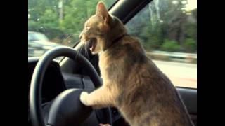 Śmieszne Zwierzęta 1 Koty