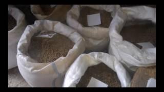 В комбикорм семечка подсолнуха вместо жмыха подсолнуха! The feed sunflower seeds!