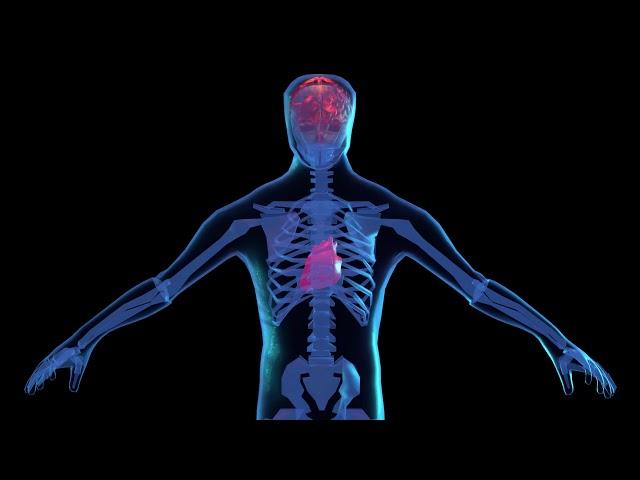 medium shot human xray