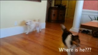 Incredible Hide And Seek - Funny Pranks Funny Dog - Funniest Video Funny Animals