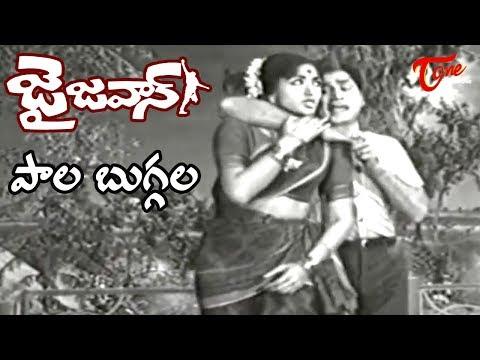 Jai Jawan Movie | Paala Buggala Song | ANR | Bharathi | Old Melody Songs - OldSongsTelugu