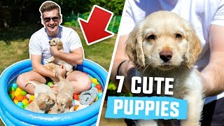 FILLING MY POOL WITH PUPPIES (WARNING - EXTREMELY CUTE)