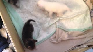 Котята начали ходить!