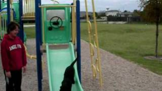 Dogs Sliding on Playscape thumbnail