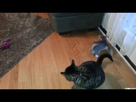 Demon Kitten from the depths of hell