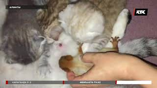 Домашняя кошка стала мамой для бельчонка