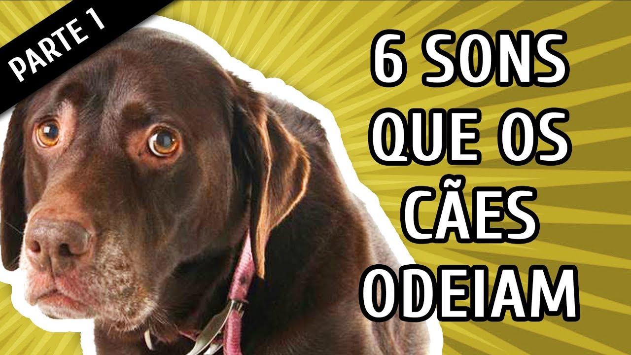 LATIDO CACHORRO MP3 DE BAIXAR