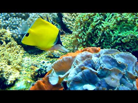l'Aquarium de Lyon