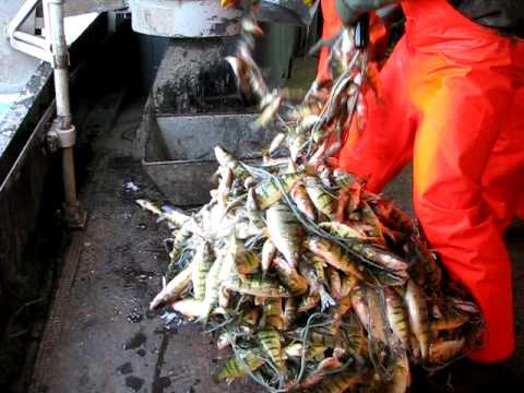 Lake Erie Yellow Perch Gill Nets Out Of ,Port Stanley