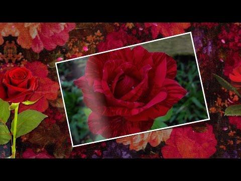 музыка и цветы друзьям