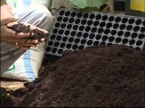 A Video On Establishing Vegetable Nursery In A Plastic