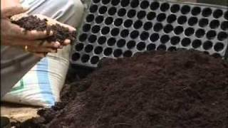 A video on establishing vegetable Nursery in a plastic tray