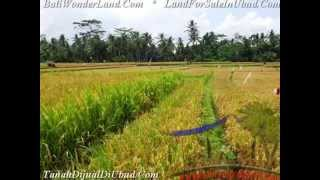 FOR SALE Exotic 1,500 m2 LAND IN Sentral Ubud Bali
