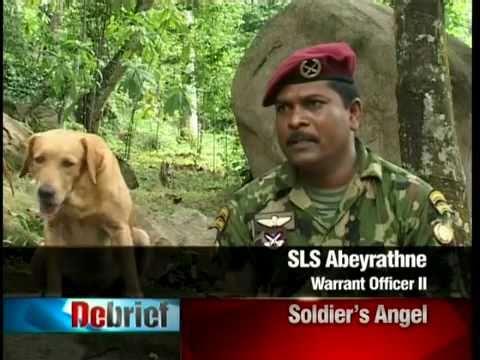 Sri Lankan Military Working Dogs