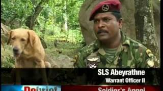 Sri Lankan Military Working Dogs